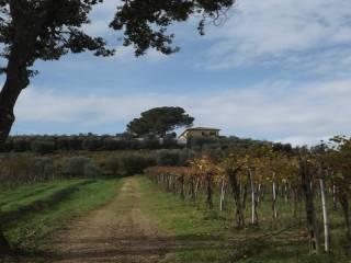 Foto - Terreno agricolo in Vendita a Cerreto Guidi