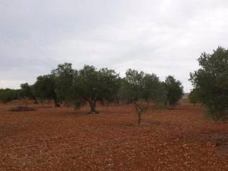 Foto - Terreno agricolo in Vendita a Corsano