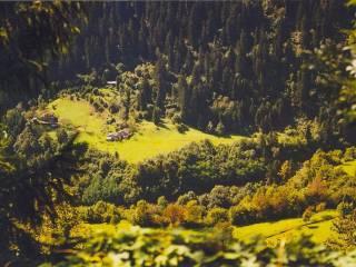 Foto - Terreno agricolo in Vendita a Lozio