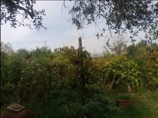 Foto - Casa indipendente Località Montecchio del Loto 410, Montecchio, Cortona