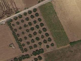 Foto - Terreno agricolo in Vendita a Melendugno