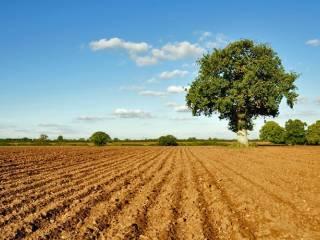 Foto - Terreno agricolo in Vendita a Porpetto