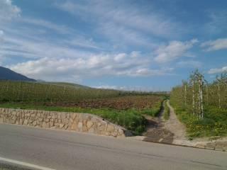 Foto - Terreno agricolo in Vendita a Ville d'Anaunia