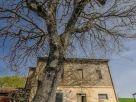 Rustico / Casale Vendita San Ginesio