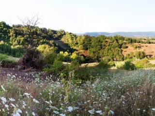 Foto - Terreno agricolo in Vendita a Chiusdino