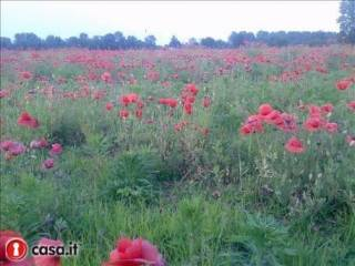 Foto - Terreno agricolo in Vendita a Solbiate