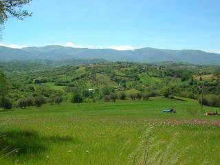 Foto - Terreno agricolo in Vendita a Montalto Uffugo