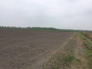Foto - Terreno agricolo in Vendita a Ostellato