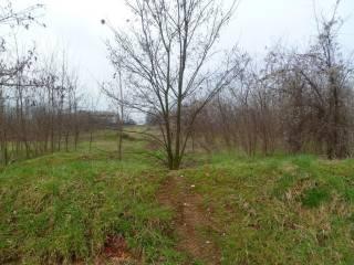 Foto - Terreno agricolo in Vendita a Origgio