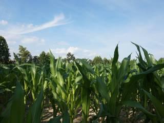 Foto - Terreno agricolo in Vendita a Vigodarzere