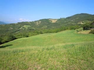 Foto - Terreno agricolo in Vendita a Varano de' Melegari