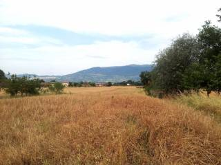 Foto - Terreno edificabile residenziale a Cannara