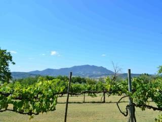 Foto - Terreno agricolo in Vendita a Stimigliano