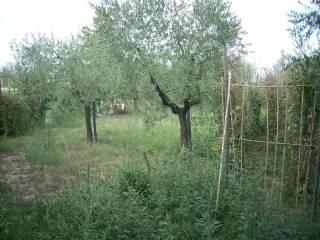 Foto - Terreno agricolo in Vendita a Quarrata