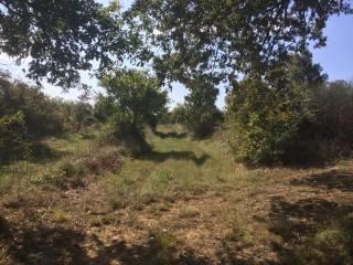 Foto - Terreno agricolo in Vendita a Monte San Savino