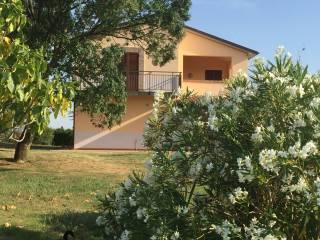 Foto - Rustico / Casale Località Pian di Palma, Saturnia, Manciano