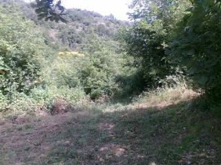 Foto - Terreno agricolo in Vendita a Sant'Elia Fiumerapido