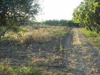 Foto - Terreno agricolo in Vendita a Elmas