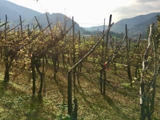 Foto - Terreno agricolo in Vendita a Berzo San Fermo