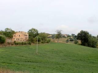 Foto - Terreno agricolo in Vendita a Morrovalle