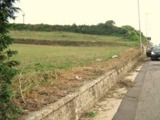 Foto - Terreno agricolo in Vendita a Vibo Valentia