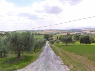 Foto - Casa indipendente Strada Provinciale della Val Cesano, Castelleone Di Suasa