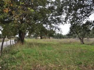Foto - Terreno agricolo in Vendita a Scalea