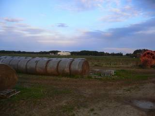 Foto - Terreno agricolo in Vendita a Bibbona