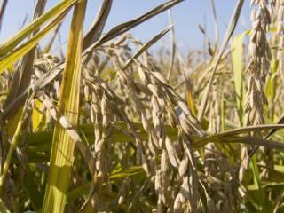 Foto - Terreno agricolo in Vendita a Novara