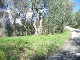 Foto - Villa via delle Ortensie 4, San Bartolomeo, Leivi