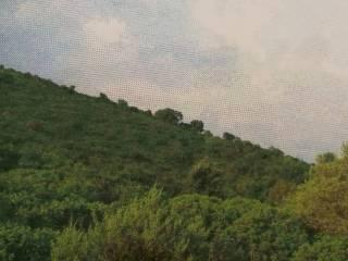 Foto - Terreno agricolo in Vendita a Sperlonga