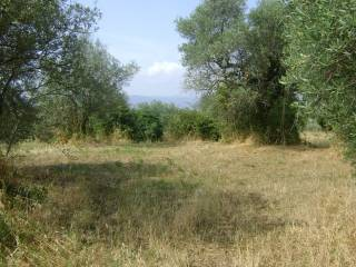 Foto - Terreno agricolo in Vendita a Poli