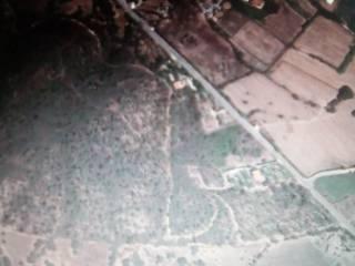 Foto - Terreno agricolo in Vendita a Bari Sardo