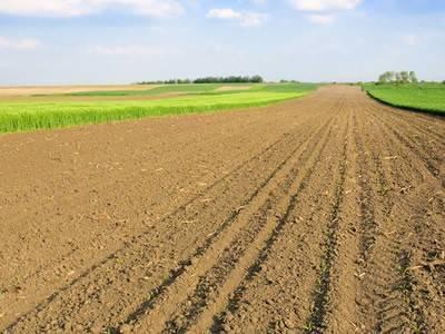 foto  Terreno agricolo in Vendita a Panicale