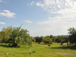 Foto - Terreno agricolo in Vendita a Noto