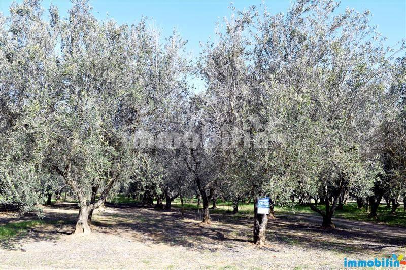 foto  Terreno agricolo in Vendita a Oria