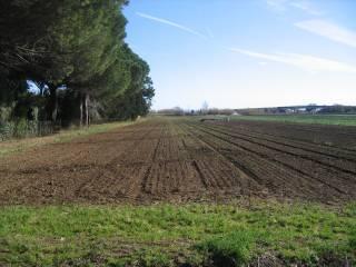 Foto - Terreno agricolo in Vendita a Campiglia Marittima