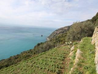 Foto - Rustico / Casale via Tramonti di Campiglia 4, Campiglia, La Spezia