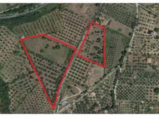 Foto - Terreno agricolo in Vendita a Blera