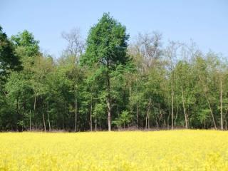 Foto - Terreno agricolo in Vendita a Castano Primo