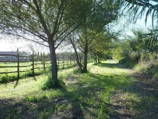 Foto - Terreno agricolo in Vendita a Pitigliano