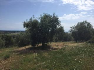 Foto - Terreno agricolo in Vendita a Castiglione della Pescaia