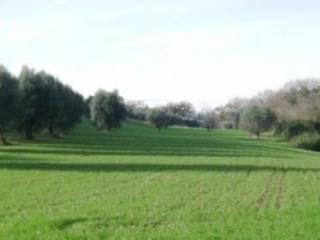 Foto - Terreno agricolo in Vendita a Corridonia