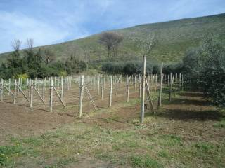 Foto - Terreno agricolo in Vendita a Camigliano