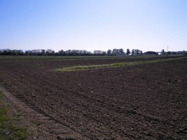 Terreno agricolo Rif.10426862