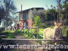 Rustico / Casale Vendita Tuscania