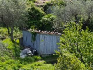 Foto - Terreno agricolo in Vendita a Ameglia