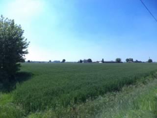 Foto - Terreno agricolo in Vendita a Nogara