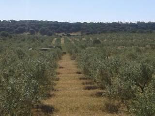 Foto - Terreno agricolo in Vendita a Onifai