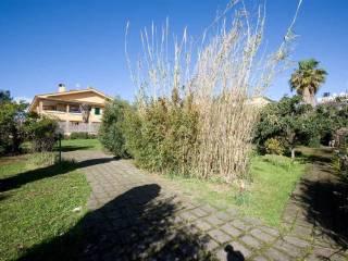 Foto - Terreno edificabile residenziale a Santa Marinella